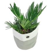 Placid Palm
