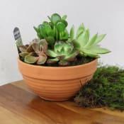 Baked Earth - Succulent Garden