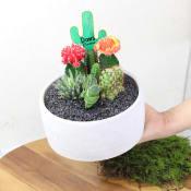 Cactus Garden - Painted Desert