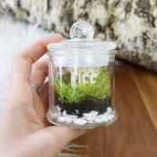 Love Life Mini Terrarium
