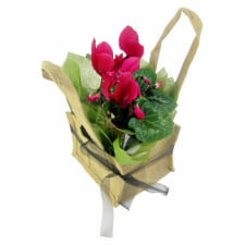 Pink Cyclamen In Hessian Bag - Standard