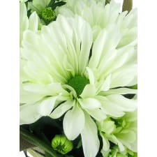 White Chrysanthemum - Standard