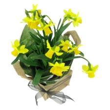 Mini Daffodil - Standard