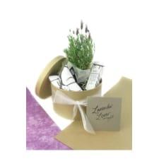 Lavender Lover Hamper - Standard