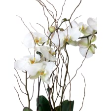 Orchid Fishbowl - Be Bold - Standard