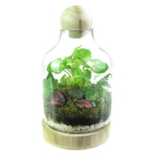 Terrarium - Tropical Forest - Standard