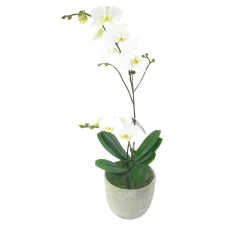 Oh My Orchids - Standard