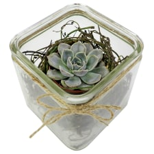 Nestled Succulent Plant - Standard