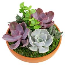 Baked Earth - Succulent Garden - Standard