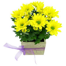 Rustic Potted Chrysanthemum - Standard