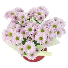 Chrysanthemum Tea Cup - Pink - Standard