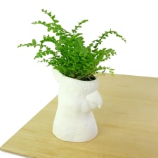 Cockatoo Planter - Standard