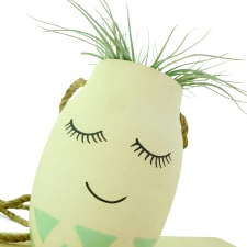 Miss Lashes - Air Plant - Standard