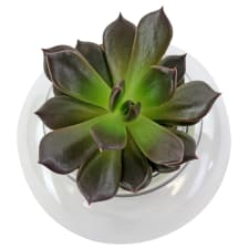 Sweetest Succulent - Standard