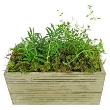 Rosemary & Thyme - Standard