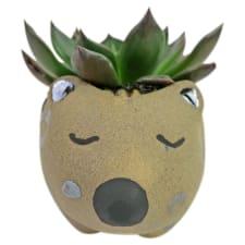 Aussie Animal Succulent - Standard