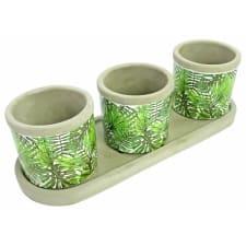 Mini Monstera Palm Pots - Standard