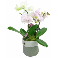 Orchid Planter Sack - Standard