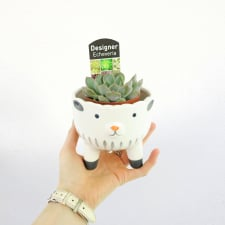 Sheep Succulent Planter - Standard