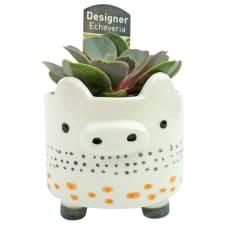 Pig Succulent Planter - Standard