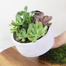 Urban Desert Succulent Garden - Standard