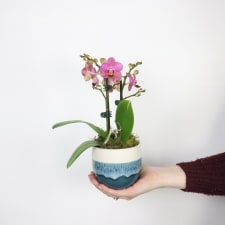 Blue Orchid Pot - Standard
