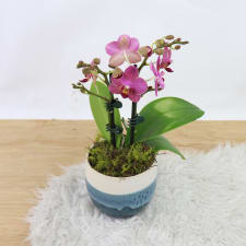 Orchid In Ombre - Blue - Standard