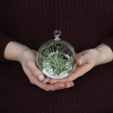 Airplant in an Orb - Standard