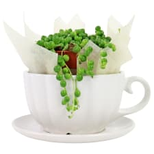 Cup o' Pearls - Standard
