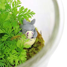 My Totoro Terrarium - Standard