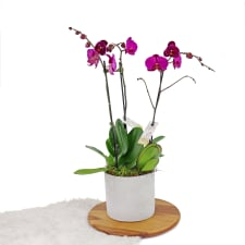Contemporary Orchids - Standard