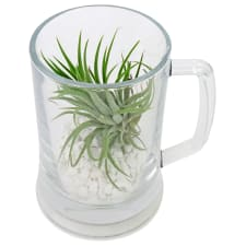 Let's Toast Air Plant - Standard
