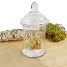 Mossy Magic Midnight Terrarium - Standard