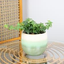 Ivy in Ombré - Green - Standard