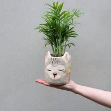 Elegant Llama Palm - Standard