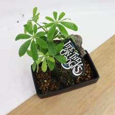 Remarkable Rock Bonsai - Standard