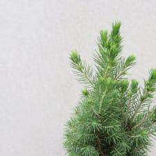 Gilded Christmas Tree - Standard