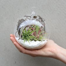 Airplant in an Orb - Deluxe