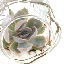 Succulent Bauble - Standard