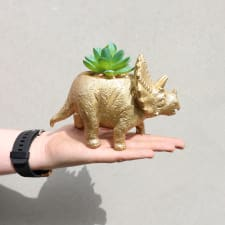 Faux Succulent Triceratops - Standard