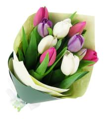 Tulips Pastel Mixed