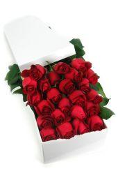 24 Elegant Roses