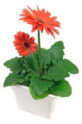Glorious Gerbera Plant - Small