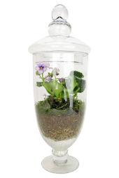 Genie In A Bottle Terrarium