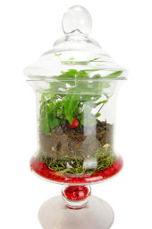 It 'Moss' Be Love Terrarium