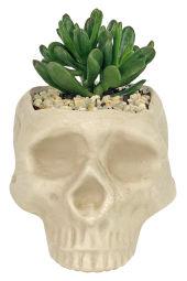 Lost Tribe Succulent