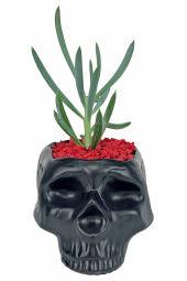 Bone-Jour Succulent