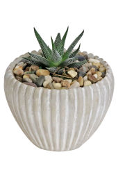 Sweetest Succulent