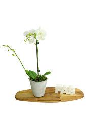 Favourite Phalaenopsis