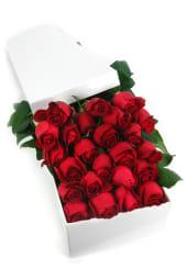 Valentine's 24 Elegant Roses